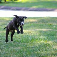 Juju running